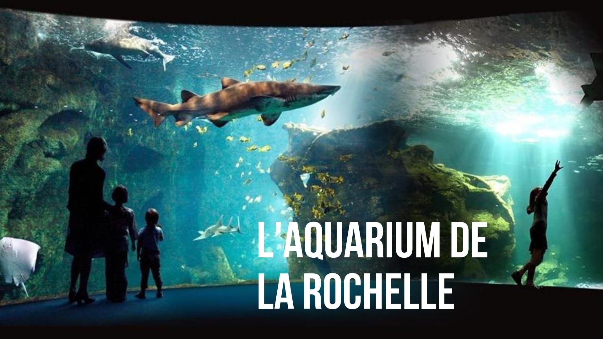 L'aquarium de La Rochelle (à 1h)