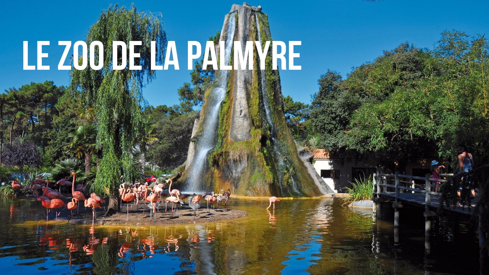 Le zoo de la Palmyre (à 1h30)