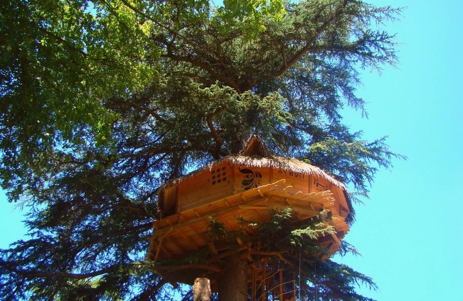 cabane-arbres-enigmes