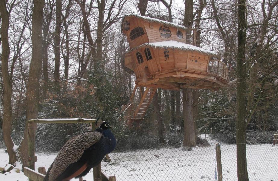cabane-dans-les-arbres-hiver