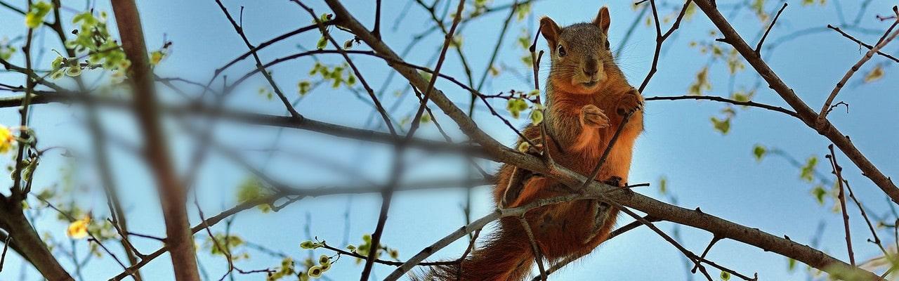 Voir des écureuils depuis la terrasse d'une cabane perchée
