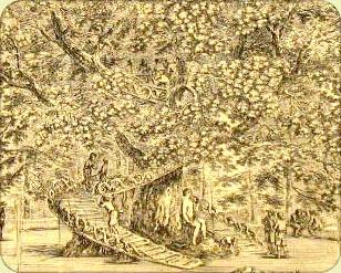 cabane-arbre-medicis-villa-protalino