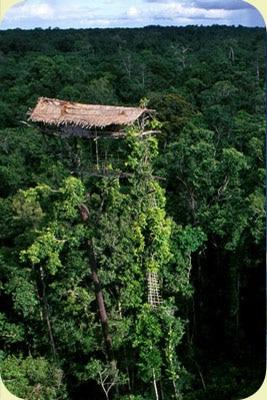 maison-arboricole-korowai