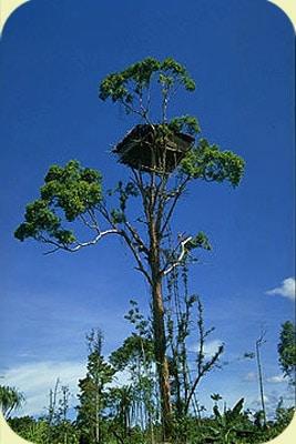 maison-arbre-korowai
