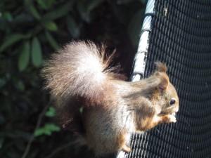 écureuil cabane zen