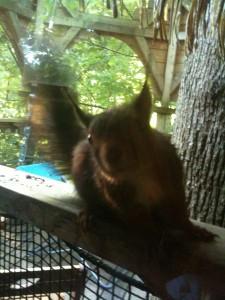 coucou l'écureuil des cabanes