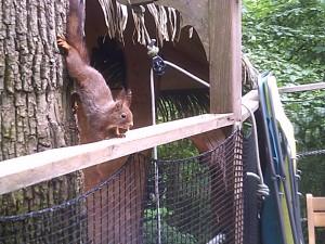 écureuils cabane des 1001 nuits