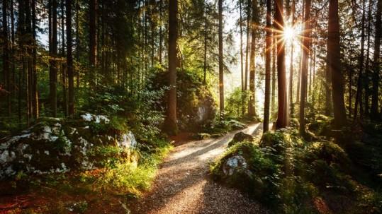 forêt-clairière-et-canopée