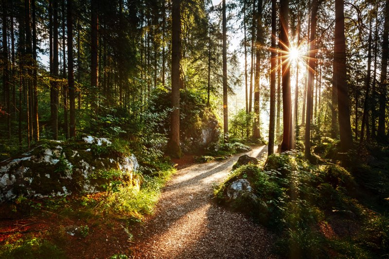 un bon bain de forêt ça vous dit sur un arbre perché